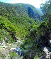 Picture relating to Guy Fawkes River National Park - titled 'View from the top of Chaelundi Falls'