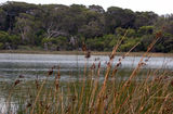 Picture relating to Robe - titled 'Old Man Lake - off Nora Creina Road'