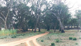 Picture of / about 'Nyah State Forest' Victoria and New South Wales - Nyah State Forest